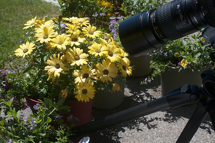 Photograph-Flowers-in-sun-3