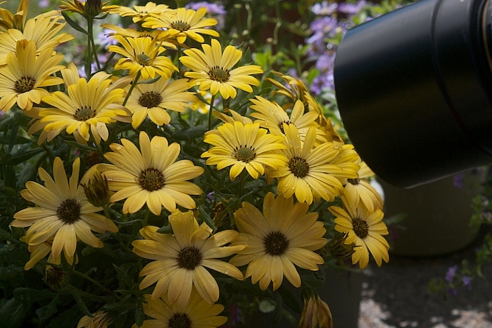 Photograph-Flowers-reflector-above