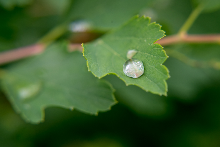 http://digital-photography-school.com/wp-content/uploads/2016/05/close-up-filters-leaf-droplet.jpg