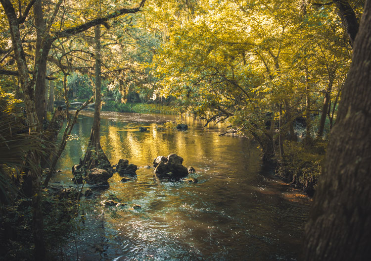 8 Quick Tips To Produce Better Forest Photography
