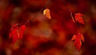 3-fall-leaves-1376.jpg