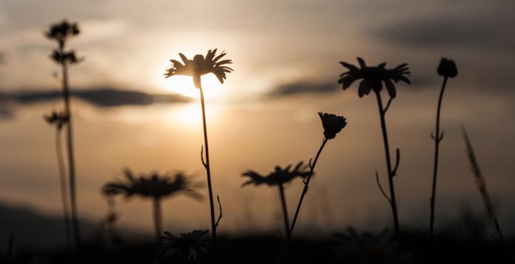 6 backlit flowers 8935