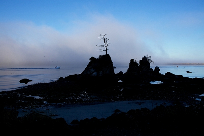 I was fascinated by this lone tree growing out of a huge rock near Garlibaldi, Oregon but I wanted to get it with a beautiful sky.