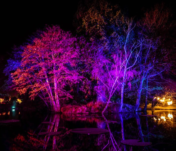 SHILL Article1 CHCH Lightshow