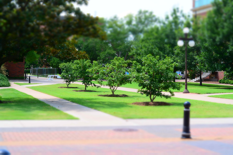 "A common camera effect is ""miniature,"" which mimics a tilt-shift lens. It's fun to play around with these built-in effects using Live View which shows you a preview of what the final image will look like as you compose it."