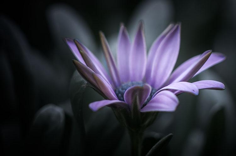leannecole-lensbaby-macro-flower-colour