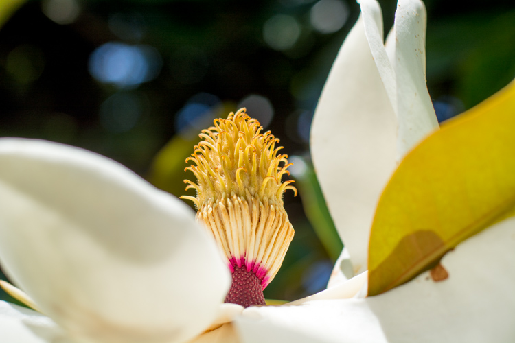 http://digital-photography-school.com/wp-content/uploads/2016/07/mode-dial-magnolia.jpg