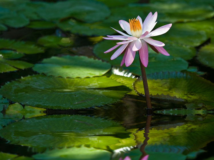 Lily Pond - landscape photography tips from pros
