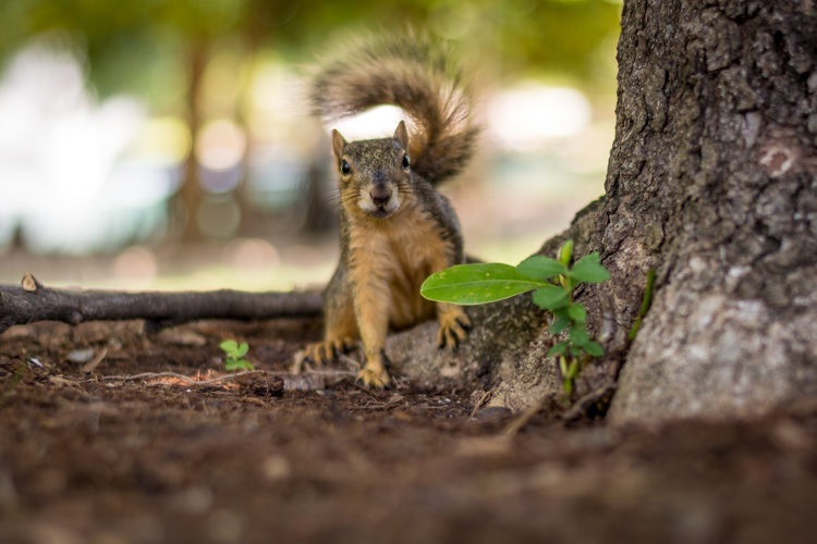 http://digital-photography-school.com/wp-content/uploads/2016/08/lightroom-adjustments-panel-squirrel.jpg