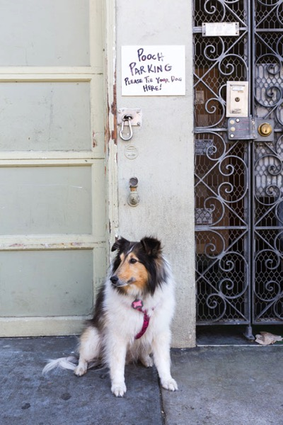 Take Your Dog on Photography Walks - dogs break the ice