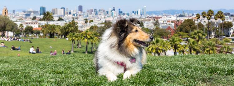 Take Your Dog on Photography Walks Header