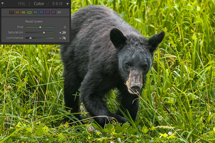 How to Expose Correctly for High Contrast Wildlife 3