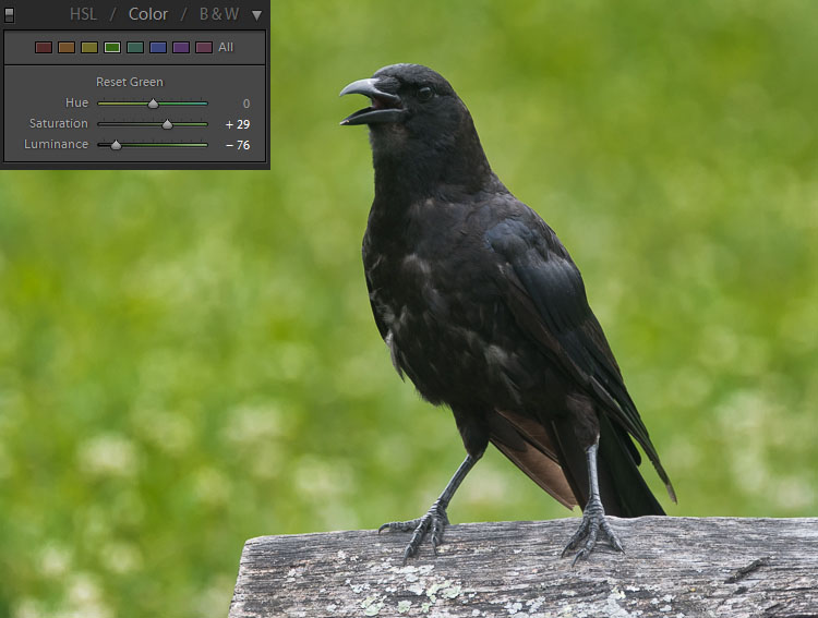 How to Expose Correctly for High Contrast Wildlife 5