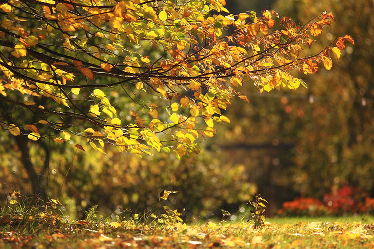 Motion fall photography02