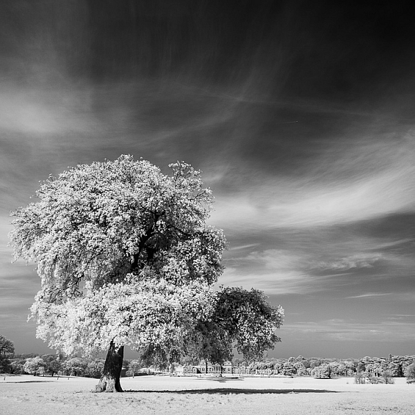How to Convert a Camera to Infrared for Black and White Landscape Photography 3
