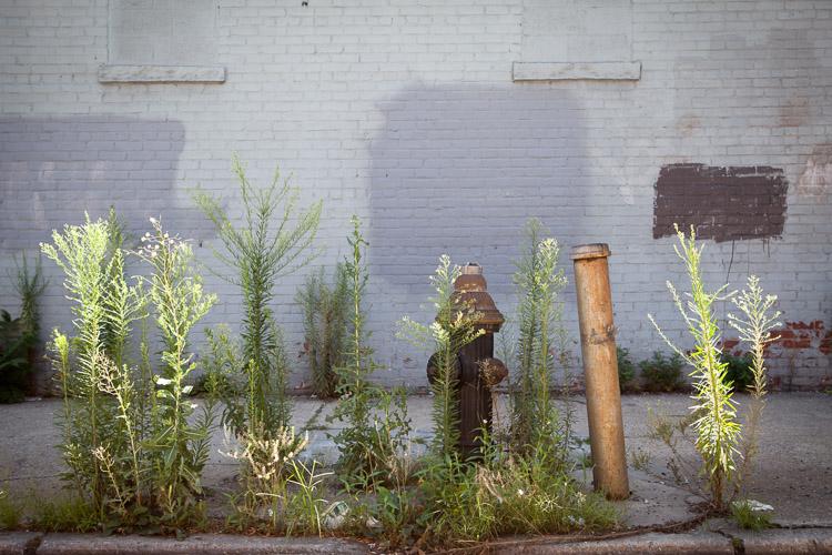 Gowanus, New York Street Photography