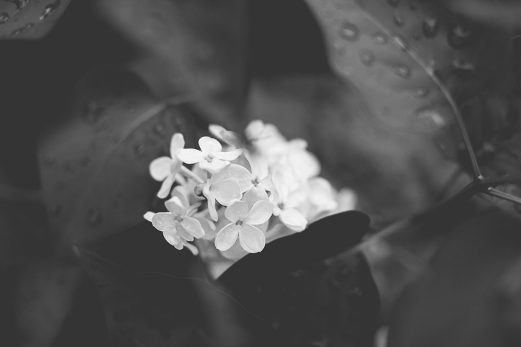 https://digital-photography-school.com/wp-content/uploads/2017/01/Memorable-Jaunts-black-and-white-photo-of-lilacs-3.jpg