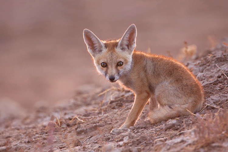 Why And How To Do Wildlife Photography At Eye Level