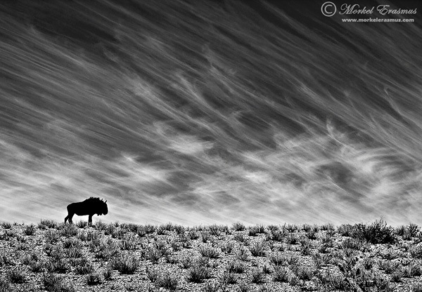10 Wildlife Photography Tips for Stunning Results