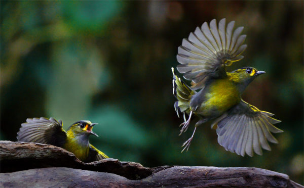 57 Fabulous Bird Images