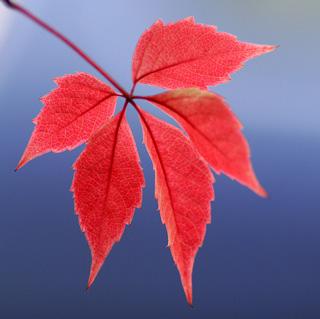 Photographing Autumn Leaves - DIY Studio